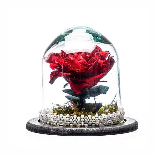 Rosa eterna chica