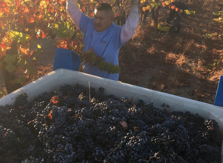 The Story of 2019 Vintage New Bordeaux Blend