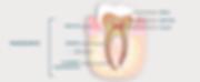 Parodonte-Dentiste-Divonne.png