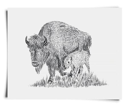 Bison Parent & Child - Art Print