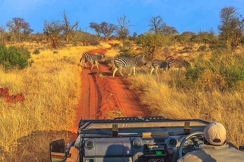 SA74a-Game-Drive-Kruger.jpg