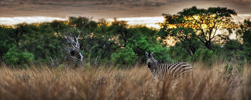 african_bushveld_s.jpg