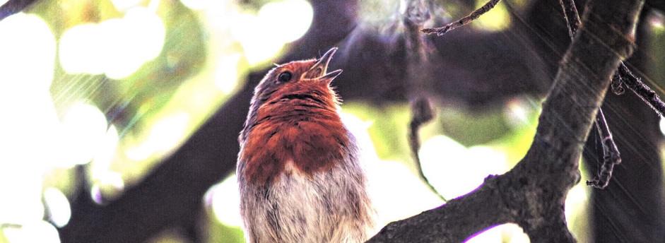 Robin's breath