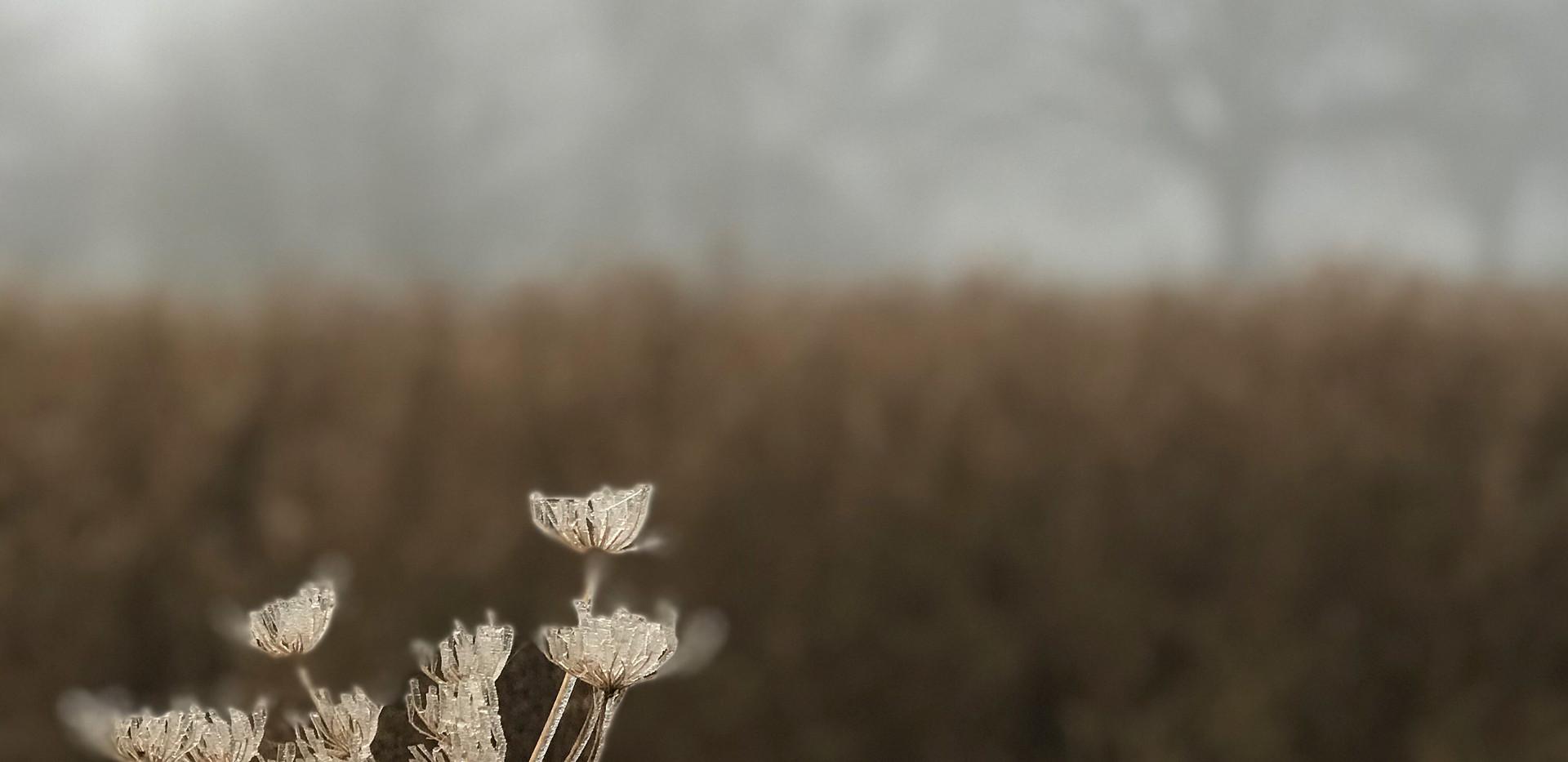 Winters Misty Beauty