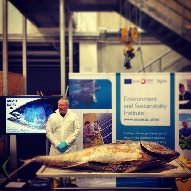 Weird and Wonderful- Bluefin Tuna Dissection