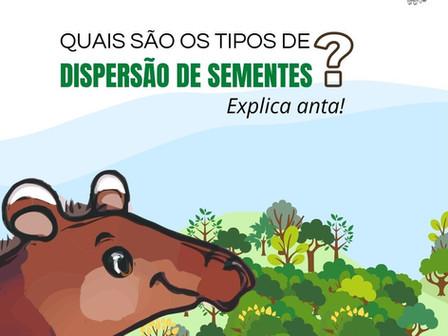 Quais os tipos de dispersão de sementes?