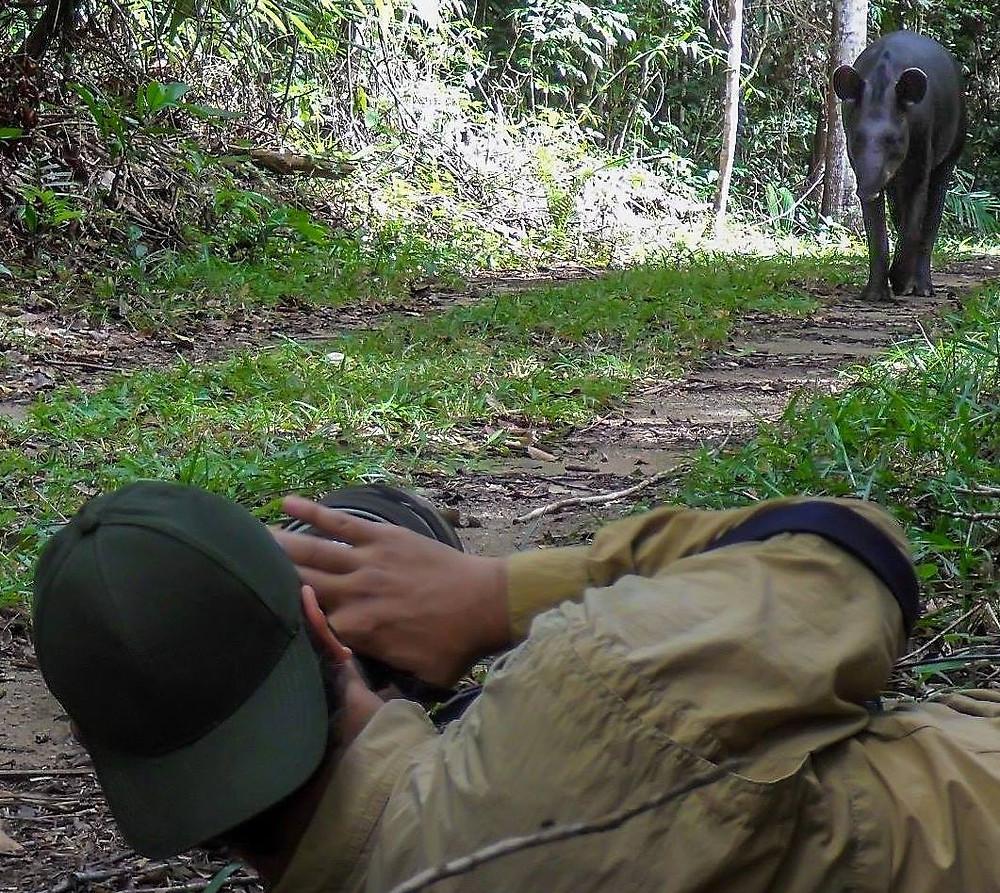 A pesquisadora Ana Carolina Srbek Araújo registrou o momento exato em que o Gustavo estava fotografando a anta, na Reserva Natural Vale.