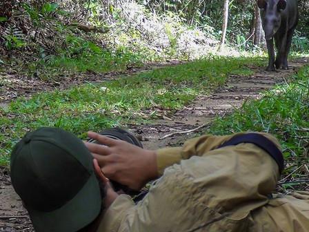 Fotografia e Conservação das Antas: uma parceria de sucesso