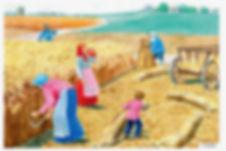 Сбор урожая солода для приготовления хлебного кваса