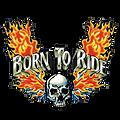 Skull-Logo.png