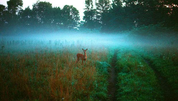 Deer  at dawn.jpg