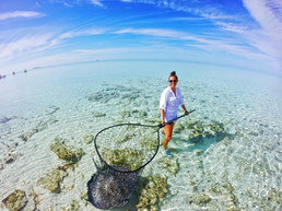 After the stingray is secured in a large dip net, it is brought to shore where measurements can be taken.
