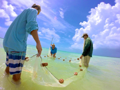 The flats research team looks inside a net to see if they've caught any mojarra. If they have, they'll release the bonefish that they had in their lab for experiments. Juvenile bonefish can often be found with schools of mojarra to help them avoid predation by barracuda.