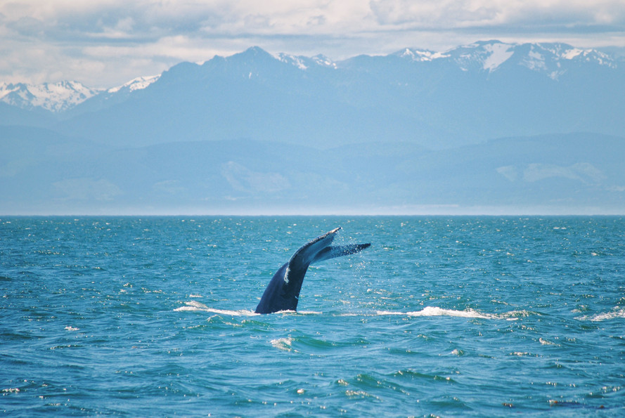 Whales and Mountains