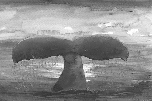 Wale Tail