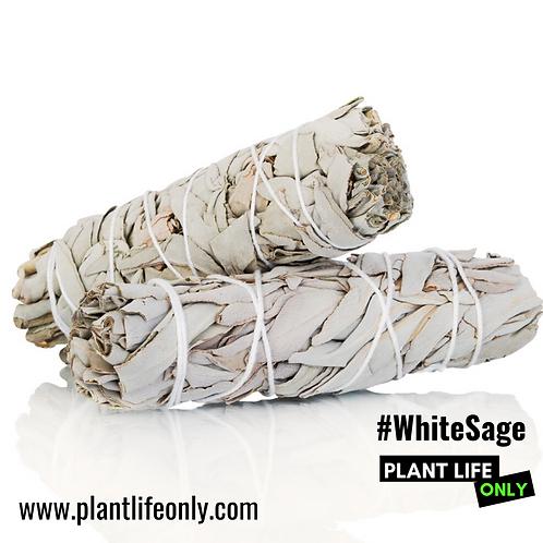 "(2) 4"" White Sage Smudge Sticks"