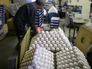 野球ボール工場・日本工場