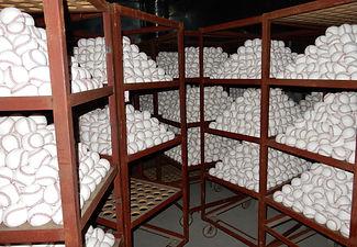硬式野球ボール 製造過程 乾燥仕上げ