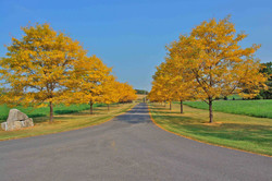Fall Trees along lane to Earlystown