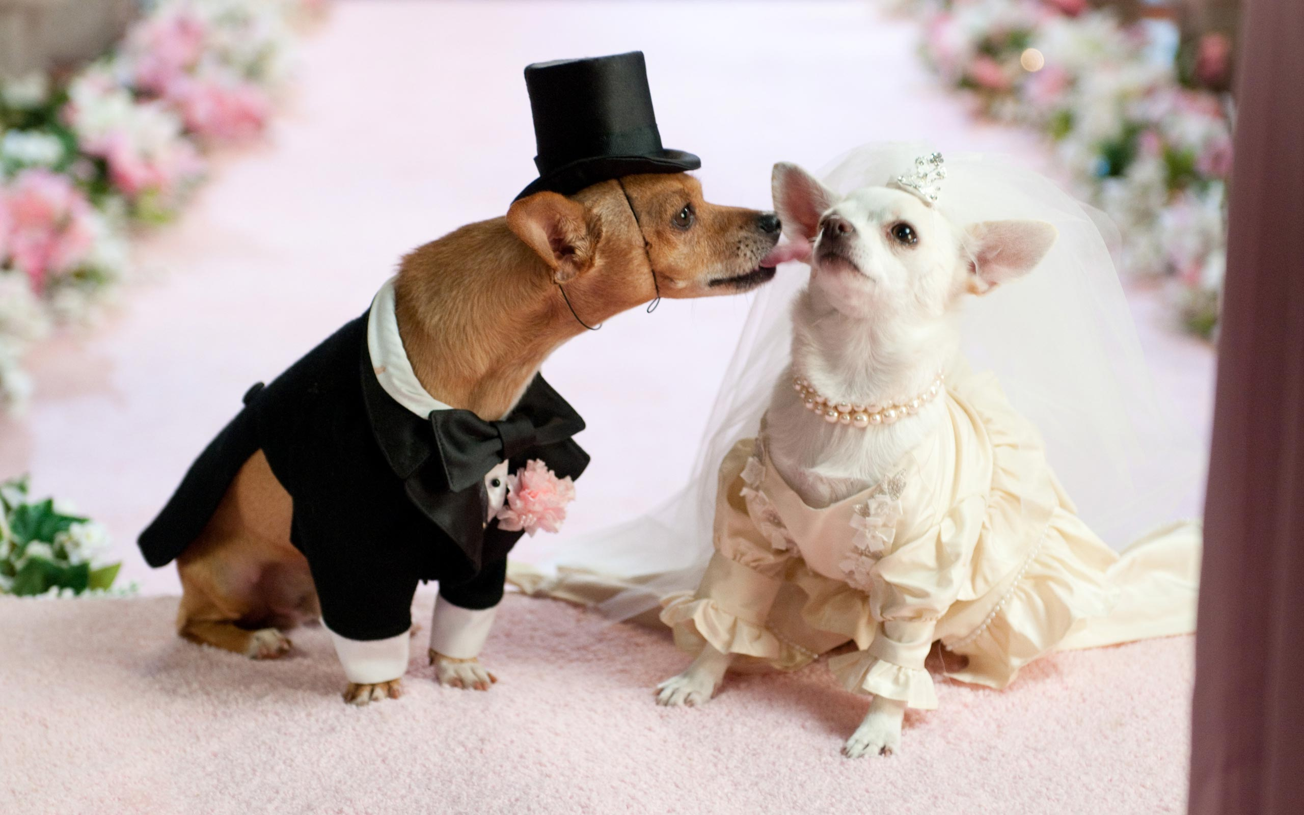 Planning Your Pet S Perfect Wedding Nittanyweddings State College Pa Resource