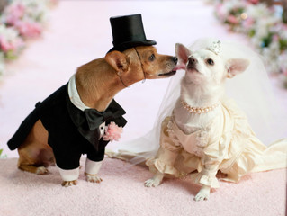 Planning Your Pet's Perfect Wedding