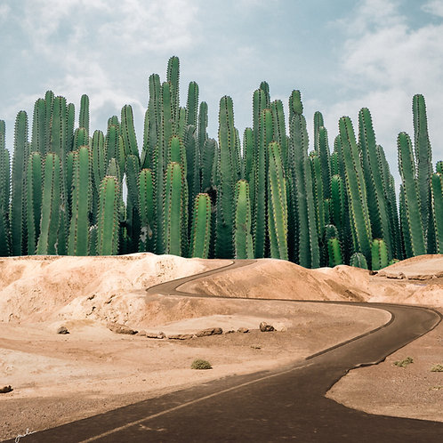 Desert Roads Take Me Home