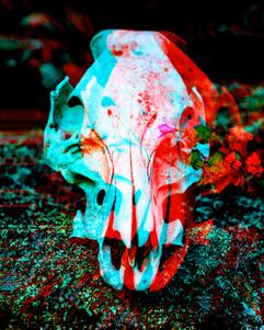 flower + skull