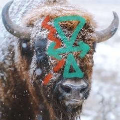 brave bison 1c