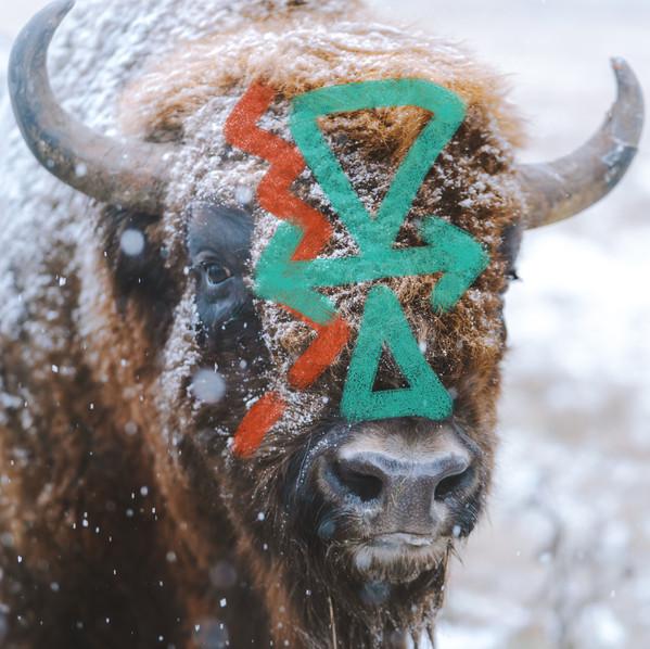 brave bison