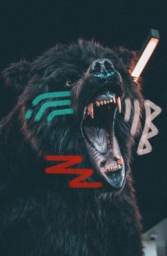 brave bear 2