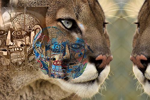 the cougar man