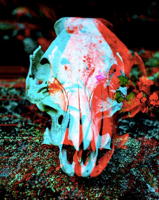 bone bloom