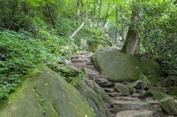 trail 6.jpg
