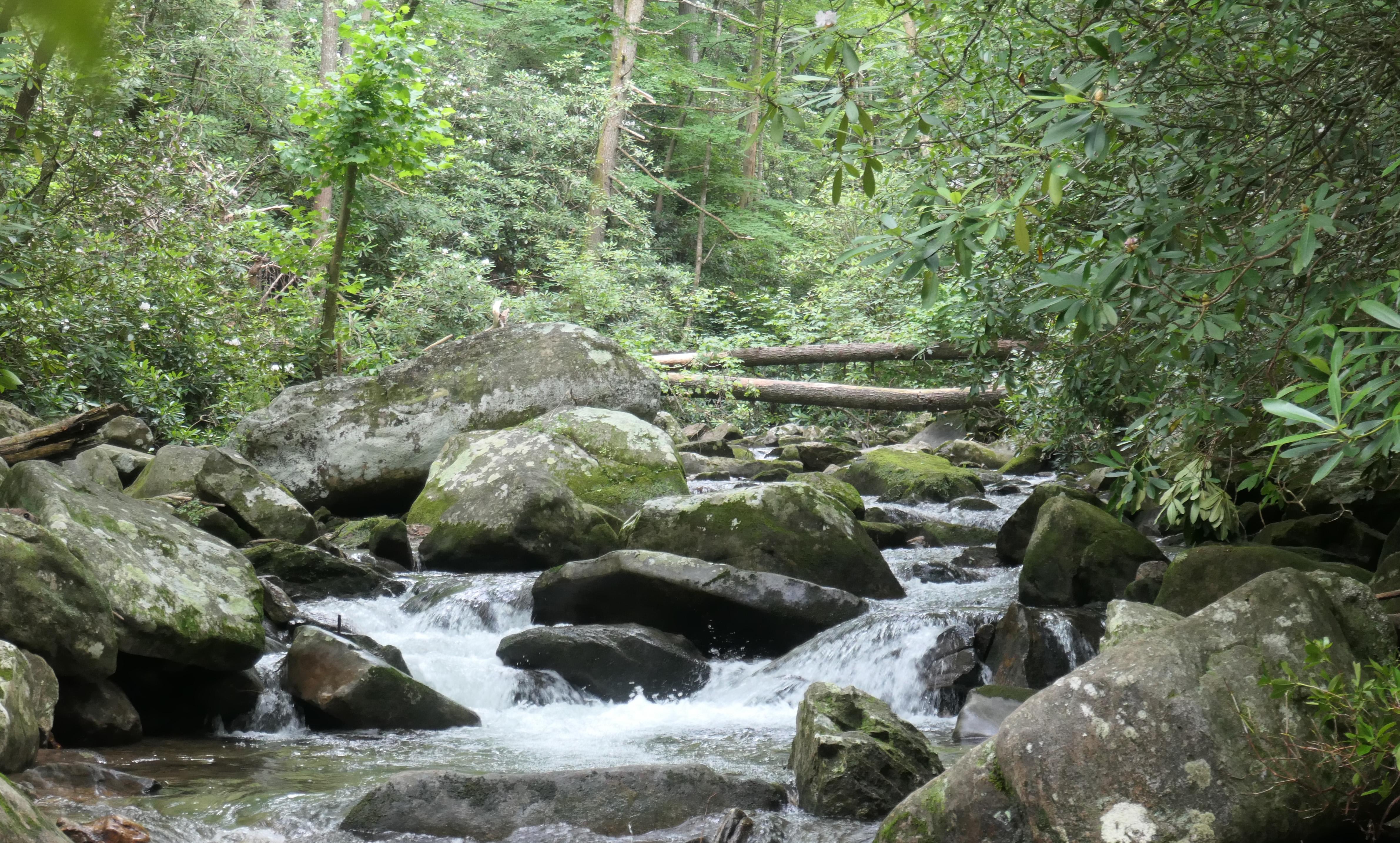 trail follows creek.jpg