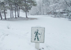 ski pole or hiking stick.jpg