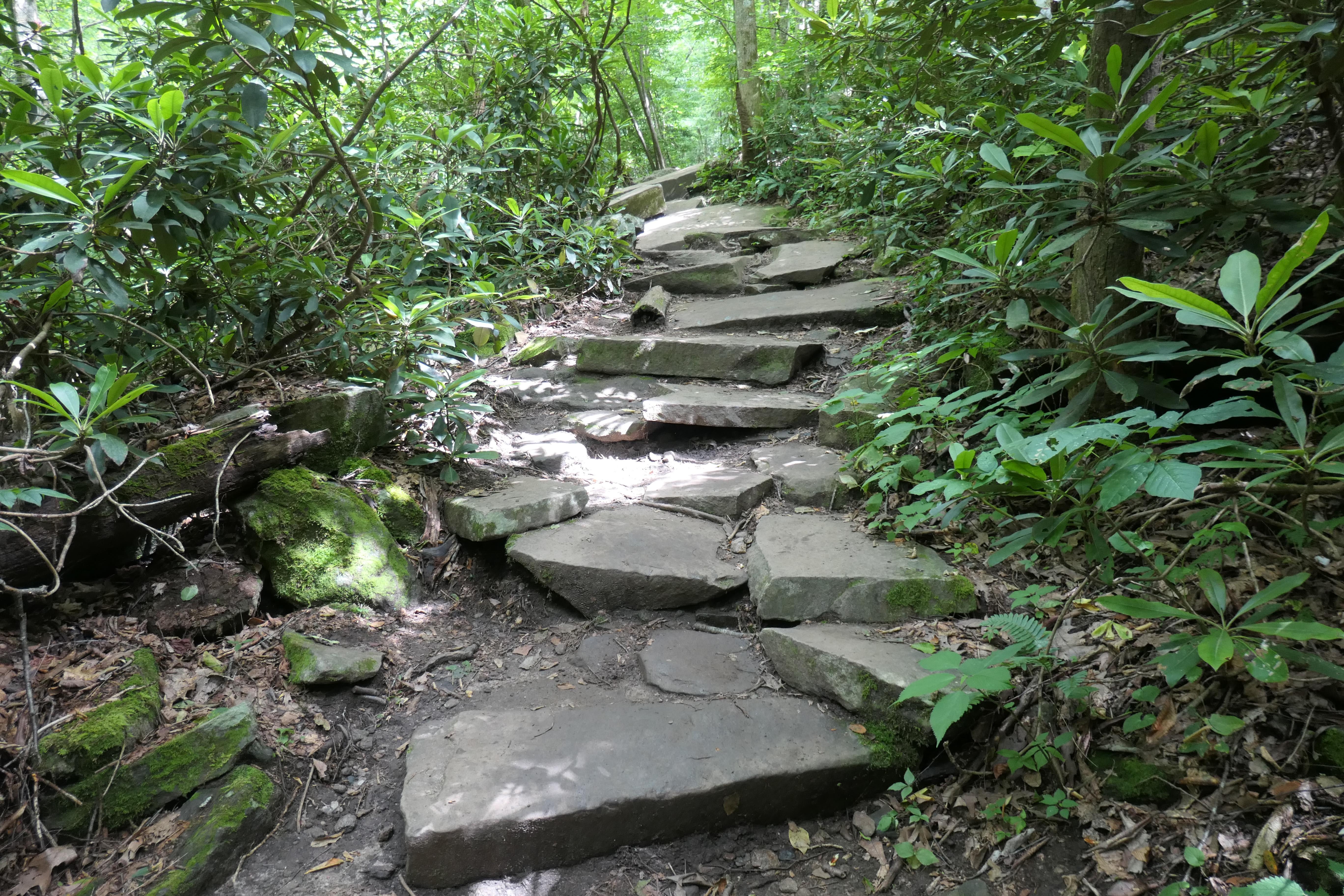 trail 3.jpg