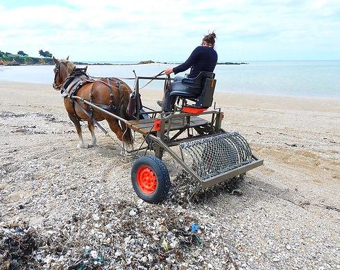 Nettoyage naturel des plages à Ambon