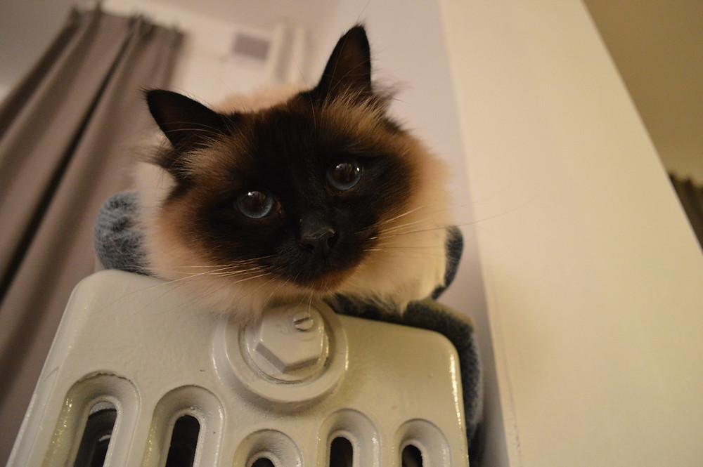 teplota v domě pro kočky