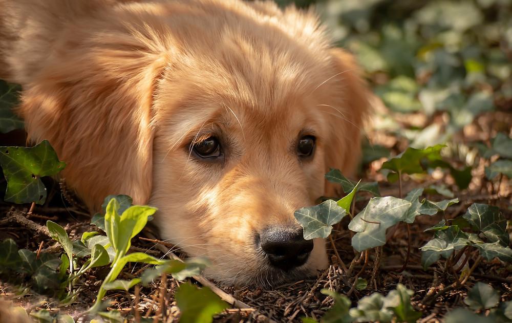 rostliny jedovaté pro psy
