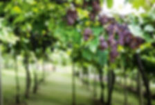 123a127_mc316_lifestyle_vinho-02.jpg