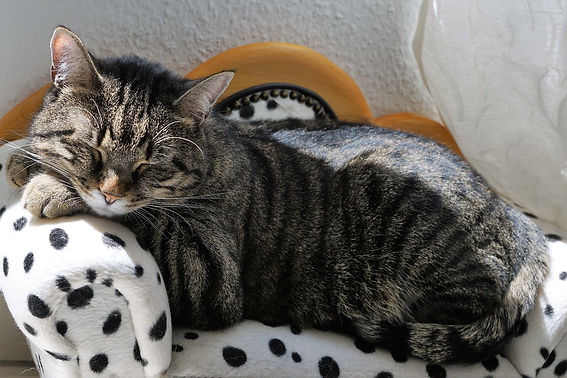cat-2439131_1920.jpg