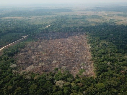 Catálogo de árvores nativas ajuda comunidades a fazer manejo florestal sustentável na Amazônia