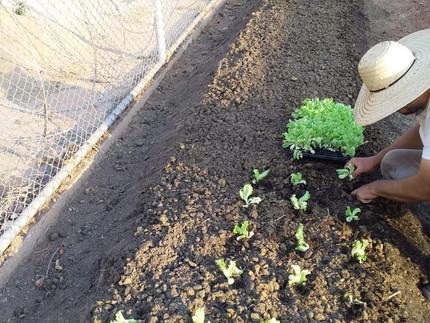 Complexo Penitenciário Ahmenon proporciona qualificação em cultivo de hortaliças para reeducandos.