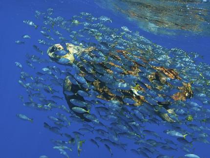 O oceano é crucial em nossas vidas e precisa de cuidado
