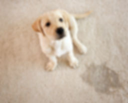 carpet-pet-stain-removal-columbia-md.jpg