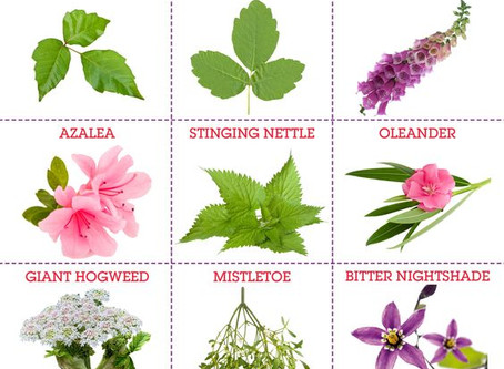 Poisonous Plants That Should Never Go On A Cake!