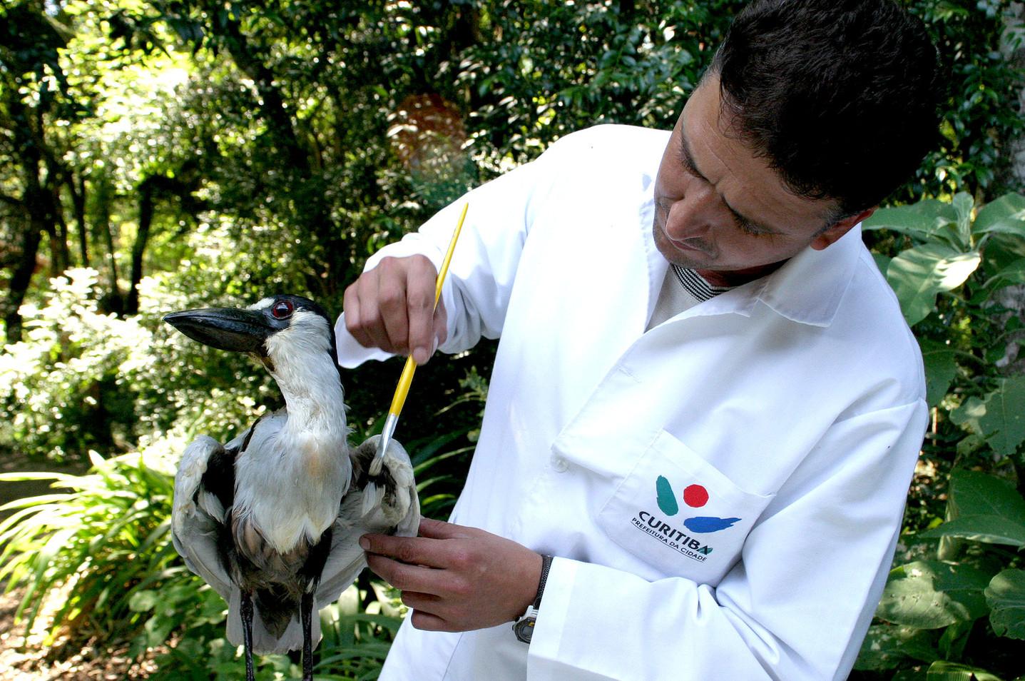 Coleção_Ornitológica1.JPG