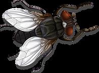 Dibujo de mosca.png