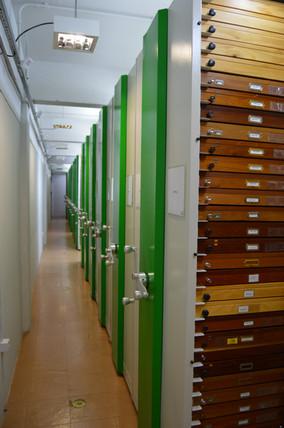 Entomological Collection – DZUP