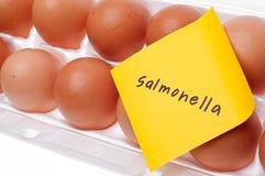 סלמונלה-מה זה בכלל?